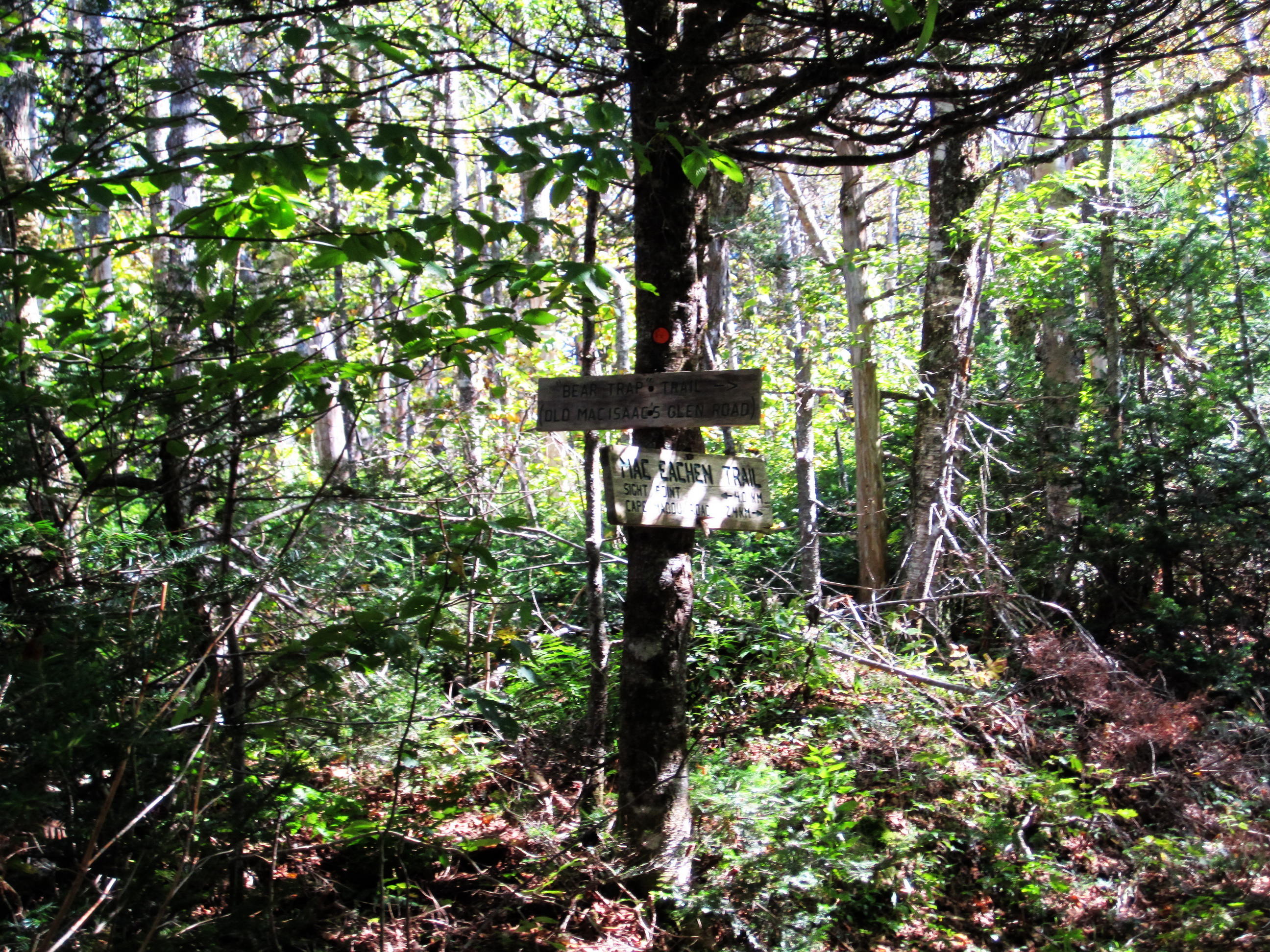 Bear Trap Trail - Cape Mabou Highlands
