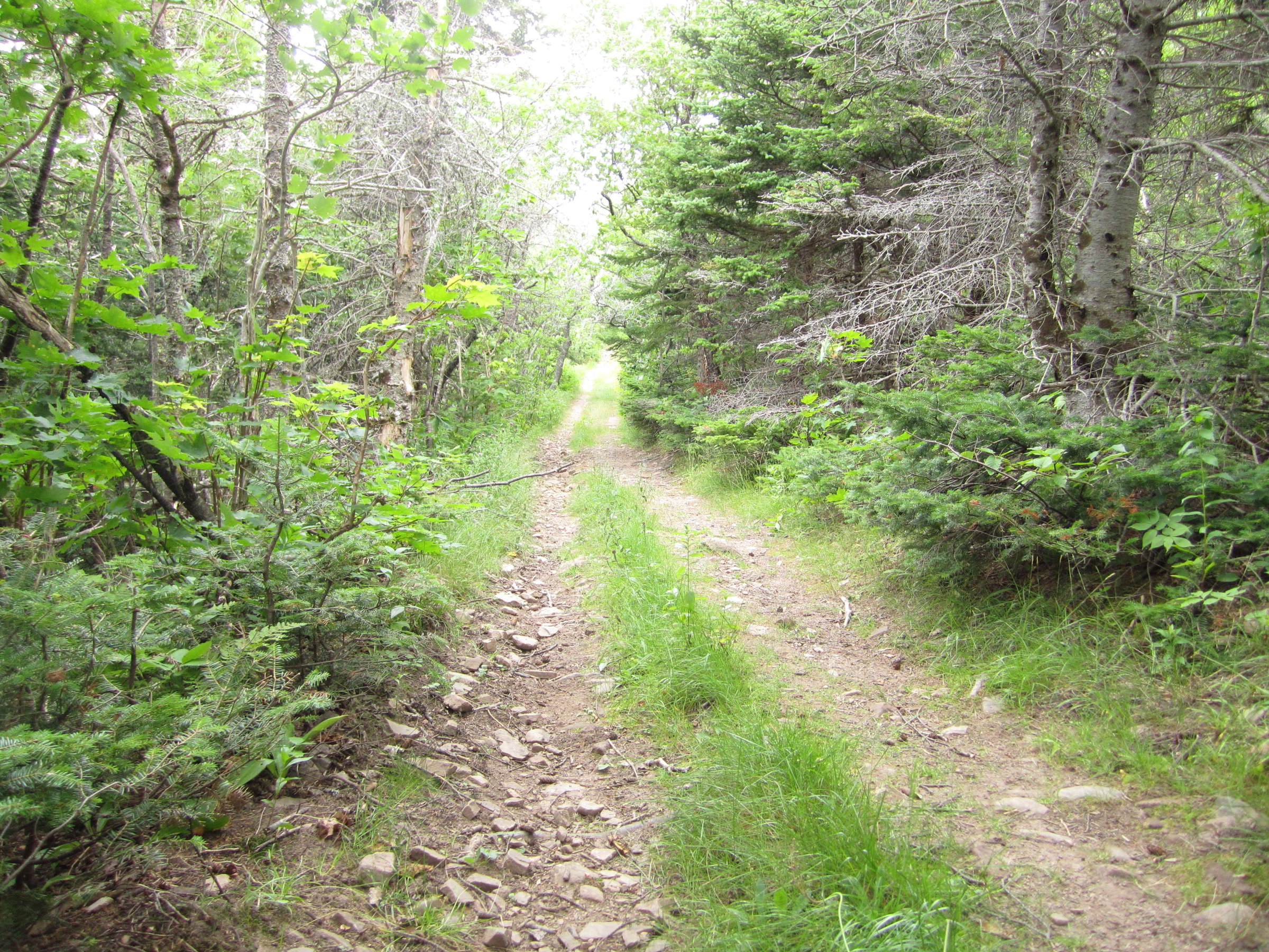 Cape.St.Lawrence.Trail