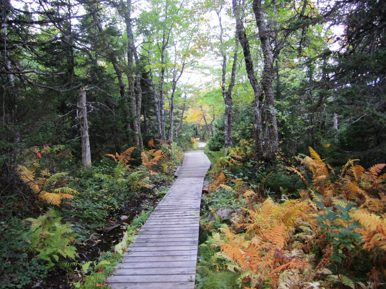 Jigging Cove Trail
